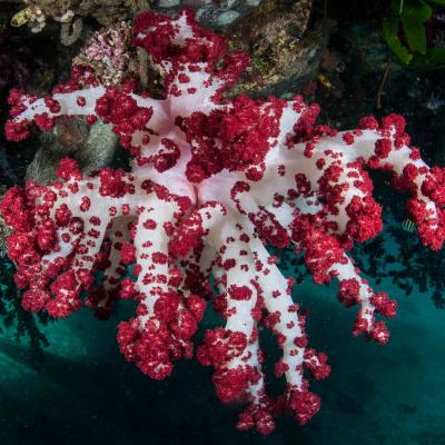 Korallen & Wirbellose