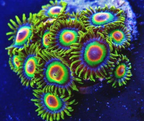 coral account login
